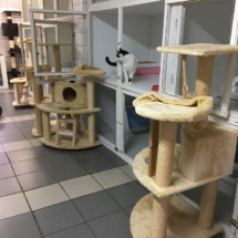 Het kattenpension vanbinnen