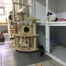 Nooit tekort aan krabpalen en speelgelegenheden bij kattenpension Galtonia!