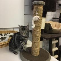 Onze nieuwe gast ontdekt alle speelmuizen in het kattenhotel