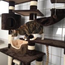 kat Buggles op ontdekking door Galtonia