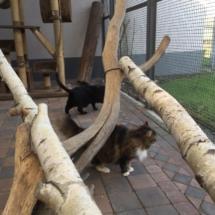 LaoLao en Zwartje op vakantie - samen in de ren