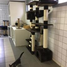 Het kattenhotel is gelegen in de provincie Antwerpen