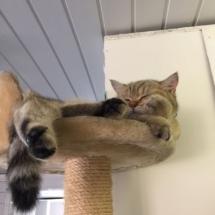 Het hoogste plekje van het kattenhotel.