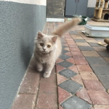 wie-zorgt-voor-mijn-kat