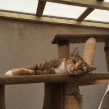 kat-geniet-van-verblijf